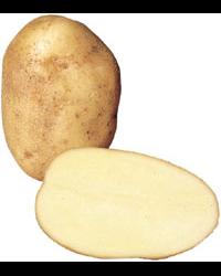 http://www.greenfieldsonline.co.uk/imglib/626bab73-af5e-4bfe-9175-f1f0984b1fd9/200_250/Wilja_Potatoes.png