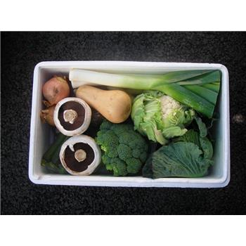 Veggie Box - Great Everyday Large